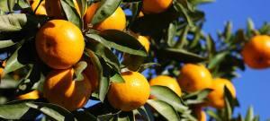 Natale al profumo di mandarino